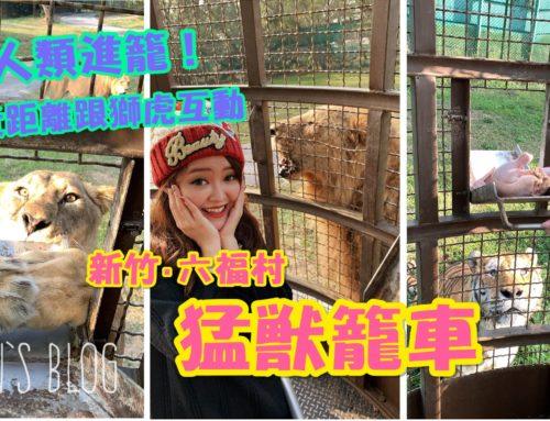 【遊記。新竹】(多影片)在台灣就能和獅子老虎超近距離接觸!關西六福村猛獸籠車。勇闖猛獸島♥