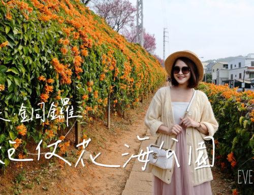 【遊記/苗栗】銅鑼炮仗花海公園,炮仗花與櫻花相映!2021.02.23花況♥